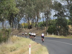 Tour De Cowra -The Pine Mount loop - 02 04 2018😊 167