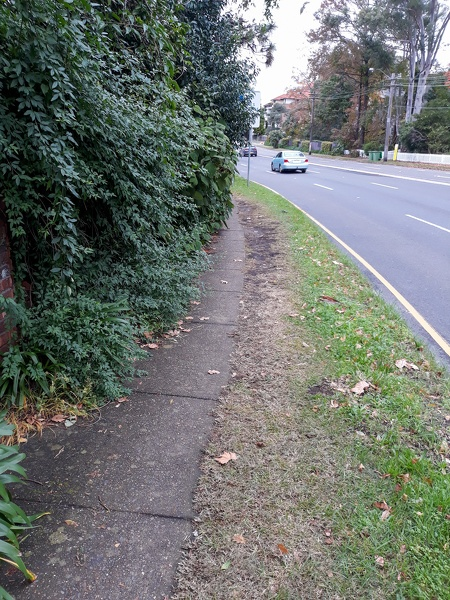 Overgrown Hedge-1.jpg